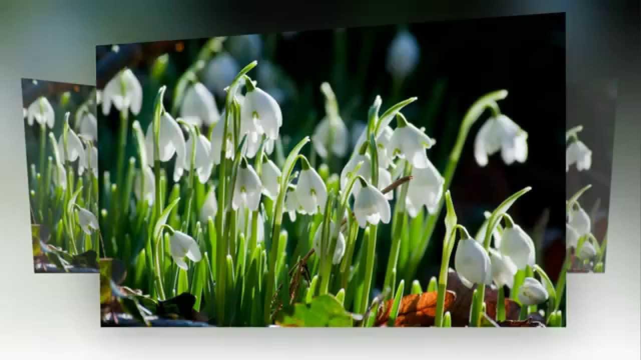 Картинки символами с праздником весны