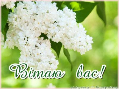 Вітаю вас весняні квіти