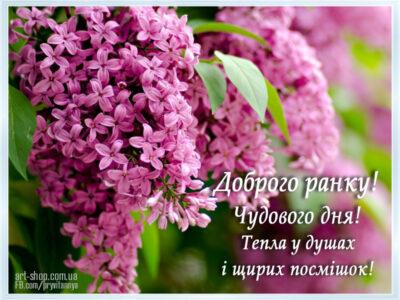 бузок листівка весна
