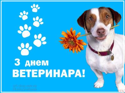 свято працівників ветеринарної медицини