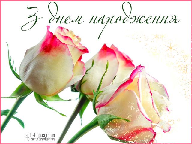 Білі троянди на День народження картинка