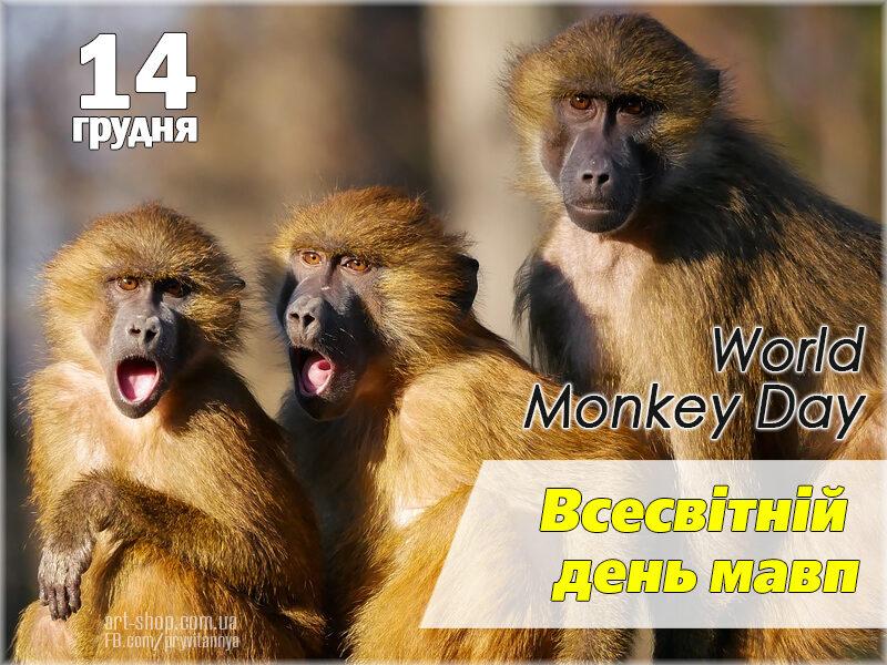 Міжнародний День Мавпи